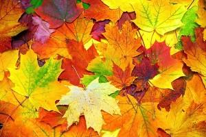 Znalezione obrazy dla zapytania jesienny liść